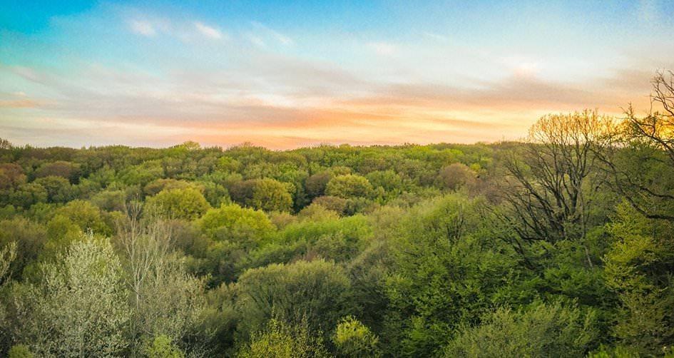 Лес, лесная зона, русская лесная дача, велодорожки, зона барбекю, беседки, ЮСК